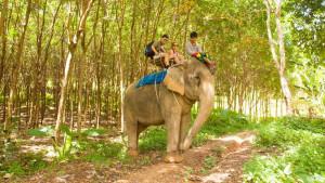 Катание на слонах на острове Ланта